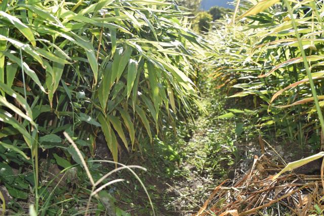 自然農法03
