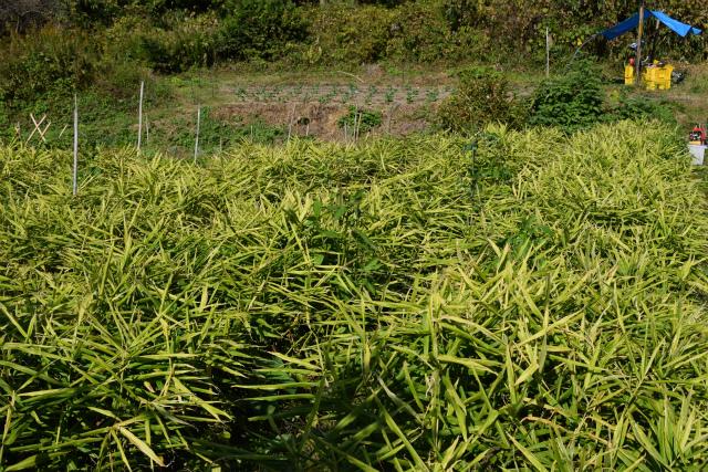 自然農法02