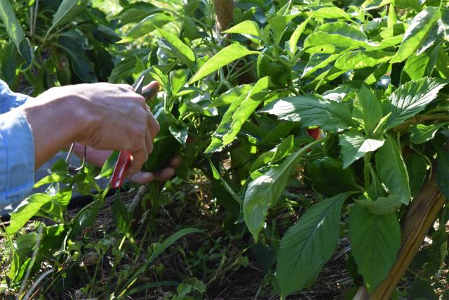 自然農法10